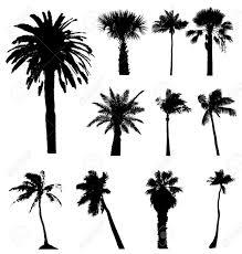 ベクトルのヤシの木のシルエットのコレクションですいずれかのサイズを簡単に編集できます