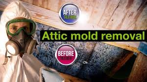 attic mold remediation cost.  Remediation Attic Mold Removal Services  Ottawa Ontario On Remediation Cost