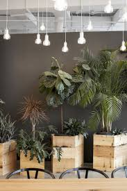 feng shui plants for office. Plants For Hire Melbourne Indoor Plant Sydney Office Desk That Grow In The Dark Green Design Feng Shui