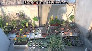 Kitchen Gardening Tips Kitchen Gardening Overview With Winter Tips December 2016