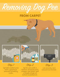 Small Picture Best 25 Dog pee ideas on Pinterest Dog pee smell Cleaning dog