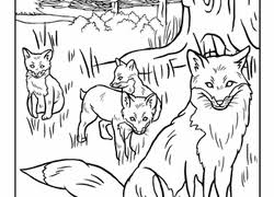 Small Picture Forest Coloring Pages Printables Educationcom