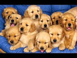 cute dogs and puppies wallpaper. Brilliant And Cute Puppies Compilation NEW Wallpaper Inside Dogs And Wallpaper N