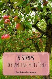 5 Steps To Planting Fruit Trees  Fruit Trees Planting And PlantsWhen Do You Plant Fruit Trees