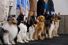 Risultati immagini per dog school