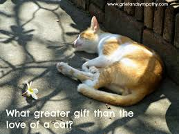Loss Of A Cat Quotes Best Beautiful Cat Loss Sympathy Cards Photographic With Quotes