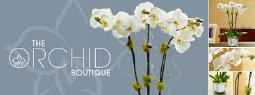 the orchid boutique orchids make perfect gifts ms scarlett s flowers gifts