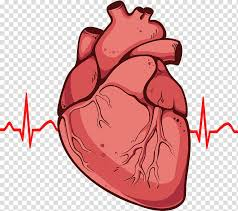 Cardiac Anatomy Chart Human Heart Heart Drawing Anatomy Diagram Human