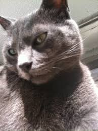 Need A Natural Remedy For Eye Conjunctivitis In Cats Natural Cat