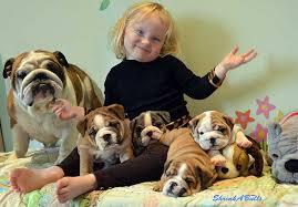 with bulldogs bulldog care