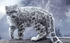 Snow Leopard Wallpapers on WallpaperSafari