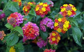 candy garden. Candy Garden Flowers Nature Beautiful Colors Wallpaper Flower Download : HD 16:9 High N