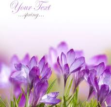 spring flower images free stock photos