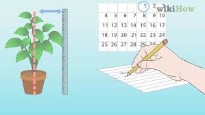 4 Ways To Measure Growth Rate Of Plants Wikihow