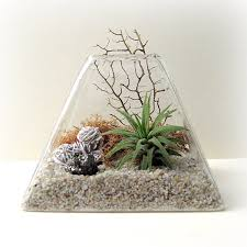 View in gallery Pyramid air plant terrarium