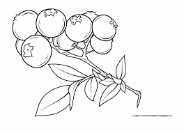 Png Free Download Fascinating Fruit Names A Z With Illustration