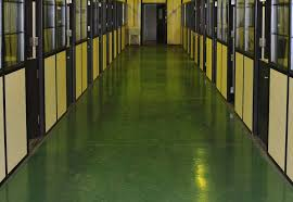 concrete kennel floor