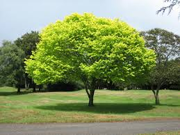 Trees Over Property Lines in Virginia | Chaplin \u0026 Gonet