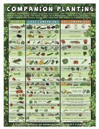 Companion Planting Chart Uk Companion Planting Afristar
