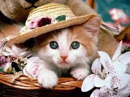 Cute cat wallpaper, Cute baby cats ...