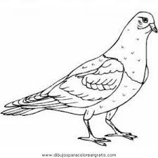 Small Picture Pigeon Coloring Pages Preschool and Kindergarten