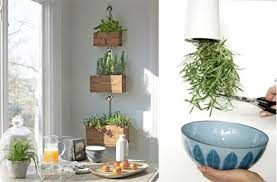 Hanging herbs in your kitchen.
