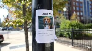 Lost Pet Poster Tirevi Fontanacountryinn Com