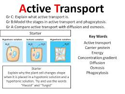 Venn Diagram Of Diffusion Osmosis And Active Transport Concentration Gradient Ppt Video Online Download