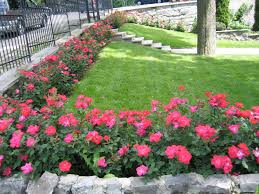 Small Picture Garden Ideas With Knockout Roses Garden Design Landscape Ideas