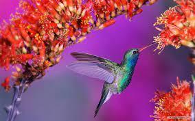 Birds wallpaper hd ...