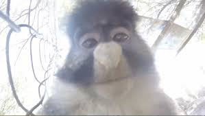 monkey steals gopro and records some awesome fooe rtm rightthisminute