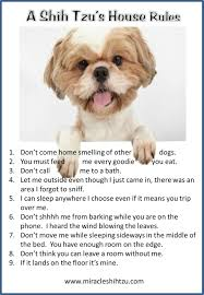 Our Favorite Dog Quotes