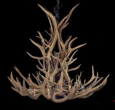 the salish here real deer horn chandelier