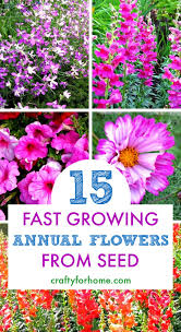 easy to grow annual flowers from seed