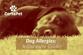 A Complete Guide to Dog Allergies: Causes, Treatments and More!