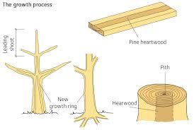 Properties Of Softwood Swedish Wood