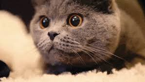 Image result for cat gif