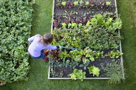 Kitchen Gardening Tips Gardening Tips Lawn Care And Gardening Advice