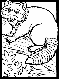 Free Printable Raccoon Coloring Pages For