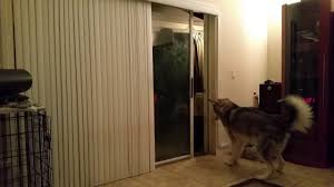 Automatic Patio Pet Door for Large Dogs - YouTube