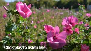 Live chat with expert gardeners: August 5, 2014 | CBC News
