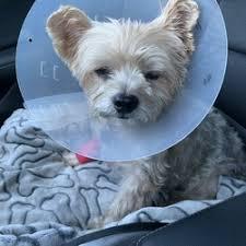 photo of orange county emergency pet clinic garden grove ca united states