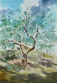 watercolour of an olive tree in the grounds of chiesa del carmine