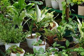 10 container garden tips for beginners