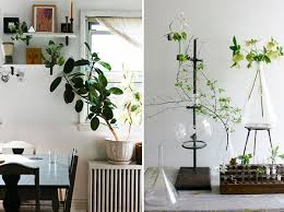 View in gallery Artful displays of indoor plants