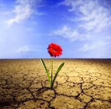 Resultado de imagem para MANANCIAIS NO DESERTO