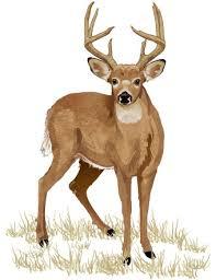 Shot Angles Quartering Toward Us Hunter Ed Com