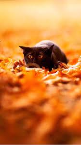 fall wallpaper iphone 5. Modren Iphone Kitten In Fall Leaves Wallpaper Intended Iphone 5 P