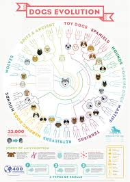 Kinds Of Dogs Chart Infographic How Dogs Evolved