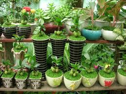 Kết quả hình ảnh cho lợi ích của trồng cây xanh